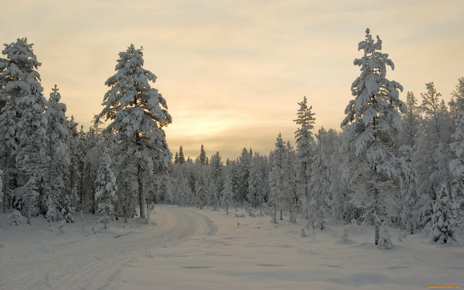 редкая картинка зимней лесной поляны нашу феечку